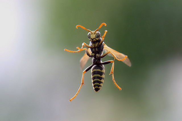 Get Rid of a Wasp Infestation with a Shop-Vac