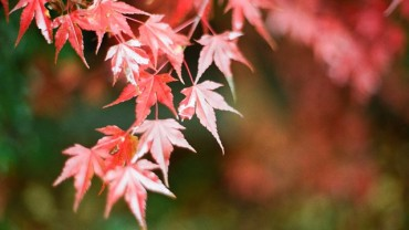 Steps to Prep Your Home for Autumn
