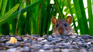 How to Prevent and Get Rid of Mice Humanely